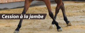 Equitation : cession à la jambe